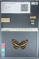 http://mczbase.mcz.harvard.edu/specimen_images/ent-lepidoptera/images/2012_04_28/IMG_117898.JPG