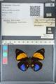 http://mczbase.mcz.harvard.edu/specimen_images/ent-lepidoptera/images/2012_04_30/IMG_118220.JPG