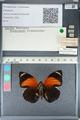 http://mczbase.mcz.harvard.edu/specimen_images/ent-lepidoptera/images/2012_04_30/IMG_118221.JPG