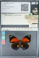 http://mczbase.mcz.harvard.edu/specimen_images/ent-lepidoptera/images/2012_04_30/IMG_118222.JPG