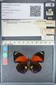 http://mczbase.mcz.harvard.edu/specimen_images/ent-lepidoptera/images/2012_04_30/IMG_118223.JPG