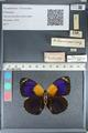 http://mczbase.mcz.harvard.edu/specimen_images/ent-lepidoptera/images/2012_04_30/IMG_118265.JPG