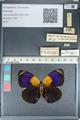 http://mczbase.mcz.harvard.edu/specimen_images/ent-lepidoptera/images/2012_04_30/IMG_118266.JPG