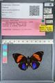 http://mczbase.mcz.harvard.edu/specimen_images/ent-lepidoptera/images/2012_04_30/IMG_118274.JPG