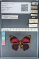 http://mczbase.mcz.harvard.edu/specimen_images/ent-lepidoptera/images/2012_04_30/IMG_118279.JPG