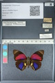 http://mczbase.mcz.harvard.edu/specimen_images/ent-lepidoptera/images/2012_04_30/IMG_118280.JPG