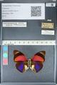 http://mczbase.mcz.harvard.edu/specimen_images/ent-lepidoptera/images/2012_04_30/IMG_118281.JPG