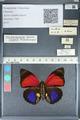 http://mczbase.mcz.harvard.edu/specimen_images/ent-lepidoptera/images/2012_04_30/IMG_118283.JPG