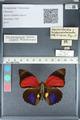 http://mczbase.mcz.harvard.edu/specimen_images/ent-lepidoptera/images/2012_04_30/IMG_118284.JPG