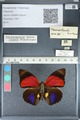 http://mczbase.mcz.harvard.edu/specimen_images/ent-lepidoptera/images/2012_04_30/IMG_118285.JPG