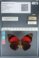 http://mczbase.mcz.harvard.edu/specimen_images/ent-lepidoptera/images/2012_04_30/IMG_118286.JPG