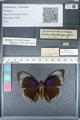 http://mczbase.mcz.harvard.edu/specimen_images/ent-lepidoptera/images/2012_04_30/IMG_118287.JPG