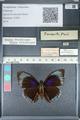 http://mczbase.mcz.harvard.edu/specimen_images/ent-lepidoptera/images/2012_04_30/IMG_118288.JPG