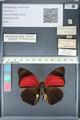 http://mczbase.mcz.harvard.edu/specimen_images/ent-lepidoptera/images/2012_04_30/IMG_118297.JPG