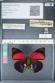 http://mczbase.mcz.harvard.edu/specimen_images/ent-lepidoptera/images/2012_04_30/IMG_118298.JPG