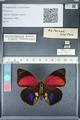 http://mczbase.mcz.harvard.edu/specimen_images/ent-lepidoptera/images/2012_04_30/IMG_118299.JPG