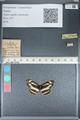 http://mczbase.mcz.harvard.edu/specimen_images/ent-lepidoptera/images/2012_05_01/IMG_118417.JPG
