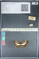 http://mczbase.mcz.harvard.edu/specimen_images/ent-lepidoptera/images/2012_05_02/IMG_118525.JPG