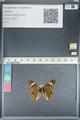 http://mczbase.mcz.harvard.edu/specimen_images/ent-lepidoptera/images/2012_05_04/IMG_118774.JPG