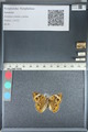 http://mczbase.mcz.harvard.edu/specimen_images/ent-lepidoptera/images/2012_05_04/IMG_118784.JPG