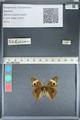 http://mczbase.mcz.harvard.edu/specimen_images/ent-lepidoptera/images/2012_05_05/IMG_118912.JPG