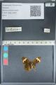 http://mczbase.mcz.harvard.edu/specimen_images/ent-lepidoptera/images/2012_05_05/IMG_118916.JPG