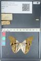 http://mczbase.mcz.harvard.edu/specimen_images/ent-lepidoptera/images/2012_05_07/IMG_119005.JPG