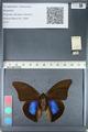 http://mczbase.mcz.harvard.edu/specimen_images/ent-lepidoptera/images/2012_05_07/IMG_119072.JPG