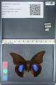 http://mczbase.mcz.harvard.edu/specimen_images/ent-lepidoptera/images/2012_05_07/IMG_119074.JPG