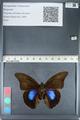 http://mczbase.mcz.harvard.edu/specimen_images/ent-lepidoptera/images/2012_05_07/IMG_119075.JPG