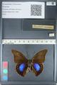 http://mczbase.mcz.harvard.edu/specimen_images/ent-lepidoptera/images/2012_05_07/IMG_119076.JPG