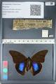 http://mczbase.mcz.harvard.edu/specimen_images/ent-lepidoptera/images/2012_05_07/IMG_119077.JPG