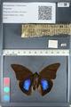 http://mczbase.mcz.harvard.edu/specimen_images/ent-lepidoptera/images/2012_05_07/IMG_119078.JPG