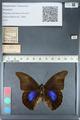 http://mczbase.mcz.harvard.edu/specimen_images/ent-lepidoptera/images/2012_05_07/IMG_119079.JPG