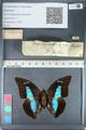 http://mczbase.mcz.harvard.edu/specimen_images/ent-lepidoptera/images/2012_05_07/IMG_119116.JPG