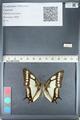 http://mczbase.mcz.harvard.edu/specimen_images/ent-lepidoptera/images/2012_05_09/IMG_119150.JPG