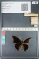 http://mczbase.mcz.harvard.edu/specimen_images/ent-lepidoptera/images/2012_05_11/IMG_119387.JPG