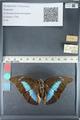 http://mczbase.mcz.harvard.edu/specimen_images/ent-lepidoptera/images/2012_05_11/IMG_119440.JPG