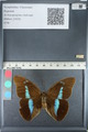 http://mczbase.mcz.harvard.edu/specimen_images/ent-lepidoptera/images/2012_05_11/IMG_119447.JPG