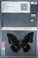 http://mczbase.mcz.harvard.edu/specimen_images/ent-lepidoptera/images/2012_05_12/IMG_119545.JPG