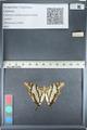 http://mczbase.mcz.harvard.edu/specimen_images/ent-lepidoptera/images/2012_05_12/IMG_119592.JPG