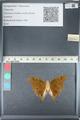 http://mczbase.mcz.harvard.edu/specimen_images/ent-lepidoptera/images/2012_05_14/IMG_119622.JPG