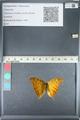 http://mczbase.mcz.harvard.edu/specimen_images/ent-lepidoptera/images/2012_05_14/IMG_119624.JPG