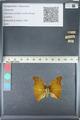 http://mczbase.mcz.harvard.edu/specimen_images/ent-lepidoptera/images/2012_05_14/IMG_119625.JPG