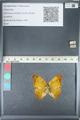 http://mczbase.mcz.harvard.edu/specimen_images/ent-lepidoptera/images/2012_05_14/IMG_119626.JPG