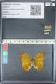 http://mczbase.mcz.harvard.edu/specimen_images/ent-lepidoptera/images/2012_05_14/IMG_119627.JPG