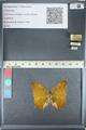 http://mczbase.mcz.harvard.edu/specimen_images/ent-lepidoptera/images/2012_05_14/IMG_119628.JPG