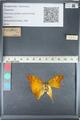 http://mczbase.mcz.harvard.edu/specimen_images/ent-lepidoptera/images/2012_05_14/IMG_119629.JPG