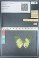 http://mczbase.mcz.harvard.edu/specimen_images/ent-lepidoptera/images/2012_05_14/IMG_119640.JPG