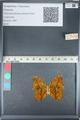 http://mczbase.mcz.harvard.edu/specimen_images/ent-lepidoptera/images/2012_05_14/IMG_119669.JPG
